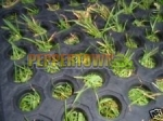 Interlocking Rubber Grass Playground Mats